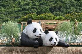 You will be picked up from your hotel at around 8:30am, and by private van  we'll head to the Beijing Panda House, which is located in the Beijing Zoo.